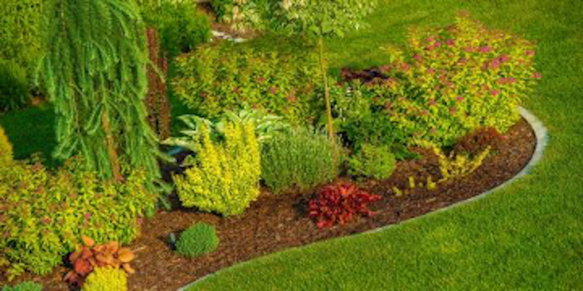 5 Best Trees & Shrubs for Your Landscaping