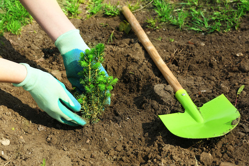 Tree & Shrub Gardening
