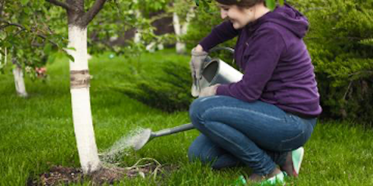 3 Reasons Why Your Garden Center & Nursery Recommends Keeping Trees & Shrubs Hydrated