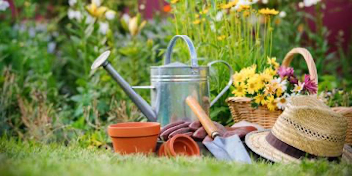 5 Plant Care Tips From Minneapolis' Top Garden Center & Nursery
