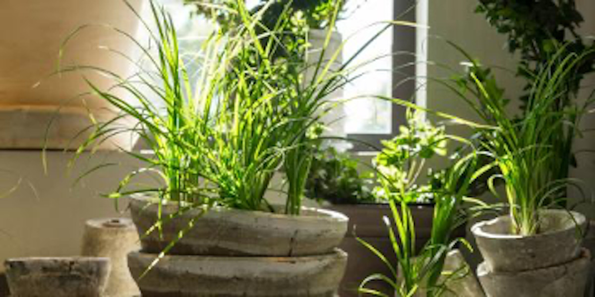 3 House Plants That Improve Indoor Air Quality