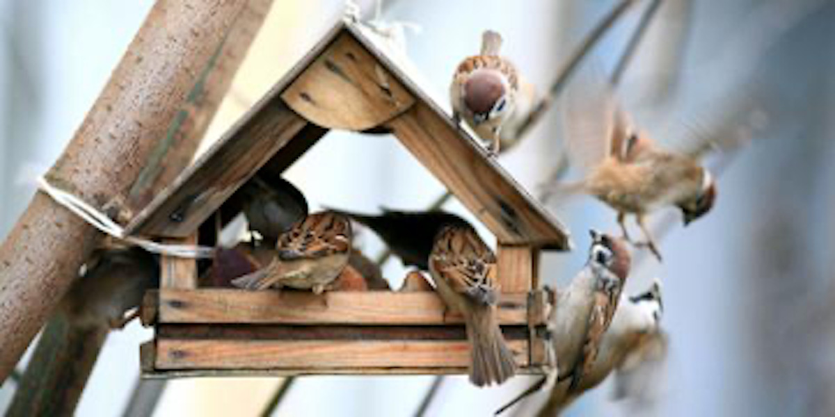 Why You Should Go to the Garden Store to Attract Wild Birds