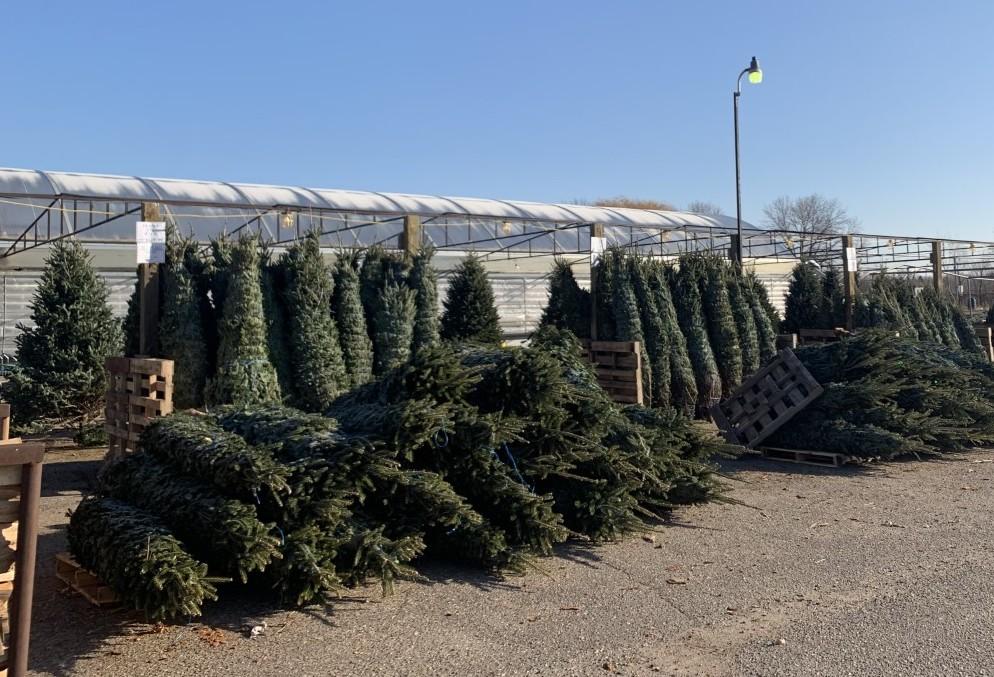 Dundee Nursery Outdoor Christmas Tree Lot