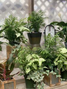 Dundee Nursery House plants