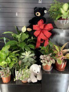 Dundee Nursery Houseplants